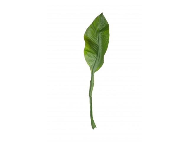 Amazon Lily Leaf